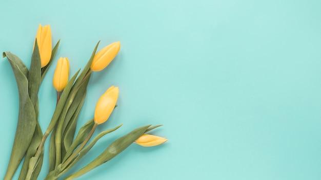 Gele tulpen op blauwe tafel Gratis Foto