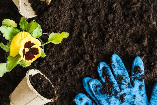 Gele viooltje bloem plant met turf pot en blauwe tuinieren handschoenen op vruchtbare grond Gratis Foto