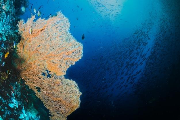 Gele zeewier met een visvis Gratis Foto