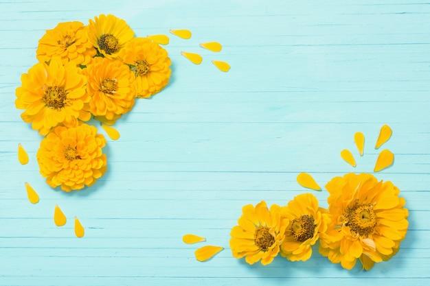 Gele zinnia bloemen op blauwe houten achtergrond Premium Foto