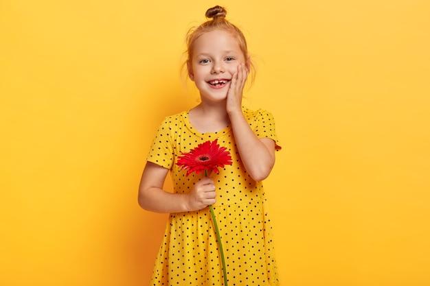 Gelukkig klein kind met gember haarbroodje, raakt de wang zachtjes aan, draagt modieuze gele jurk met stippen, houdt rode gerbera vast, wil bloem geven voor haar mama, heeft een opgewekte uitdrukking. felle kleuren Gratis Foto