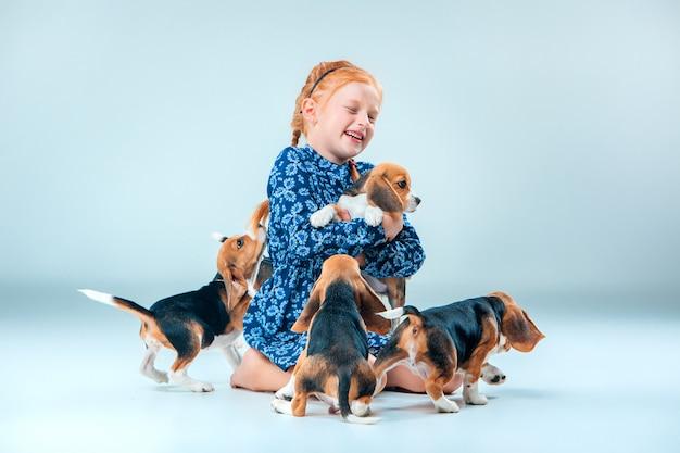 Gelukkig meisje en beagle puppy's op grijs Gratis Foto