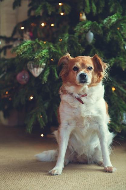 Gelukkig nieuwjaar, kerstmis, vakantie en feest, schattig hond huisdier in de kamer de kerstboom Premium Foto