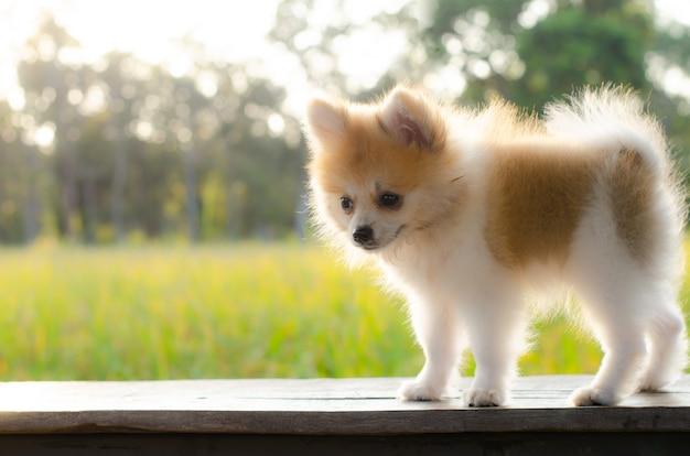 Gelukkig puppy dat in motiespel wordt gevangen op hout. Premium Foto
