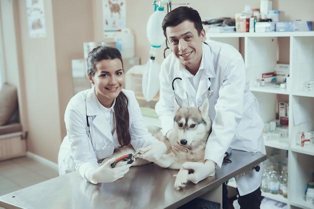 Gelukkige dierenartsen trimmer hondennagels knippen. Premium Foto