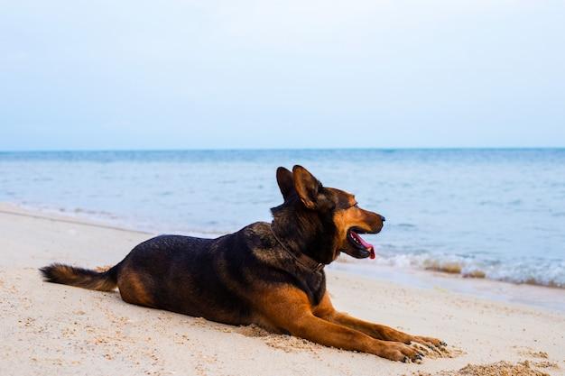 Gelukkige hond ontspannen op het strand. Premium Foto