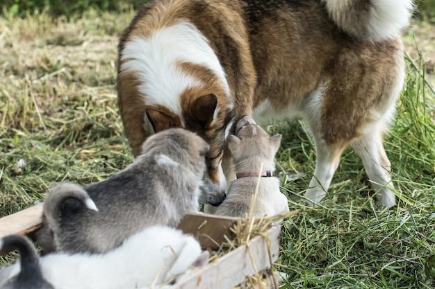 Gelukkige hondenfamilie die noch wee noch problemen vreest en tot het einde samen zal zijn Gratis Foto