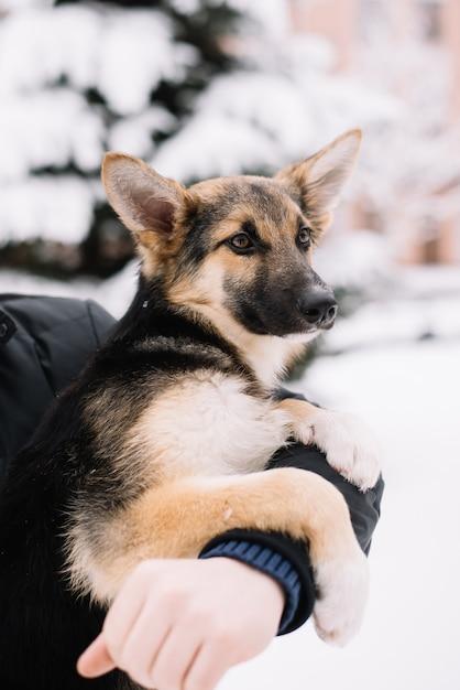 Gelukkige hondzitting op de handen van een mens in de sneeuwwinter Premium Foto