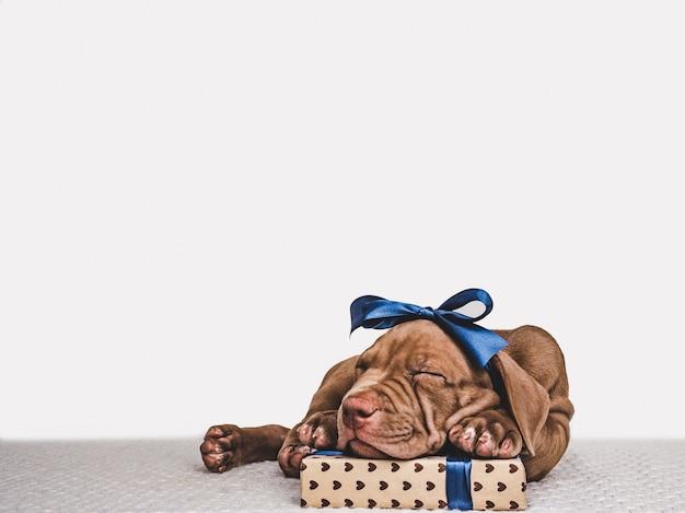 Gelukkige verjaardagscadeau doos met charmante puppy van pit bull hond Premium Foto