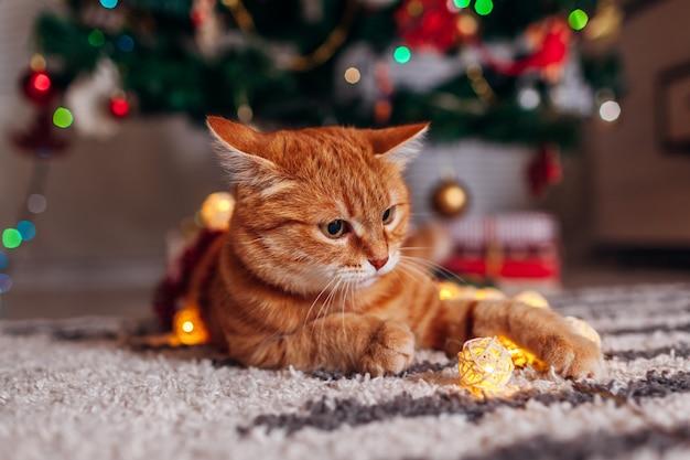 Gemberkat het spelen met slinger onder kerstboom. kerstmis en nieuwjaar concept Premium Foto