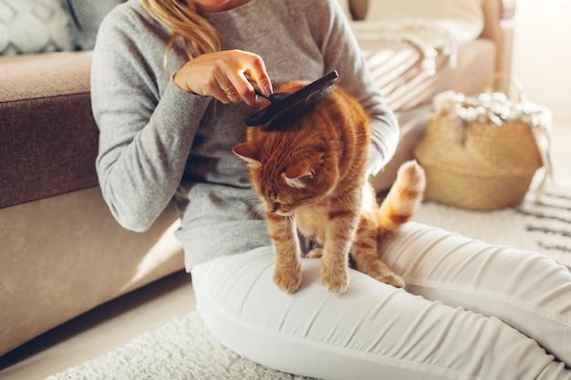 Gemberkat thuis kammen met kamborstel. vrouweneigenaar die huisdier behandelen om haar te verwijderen. schone dieren Premium Foto