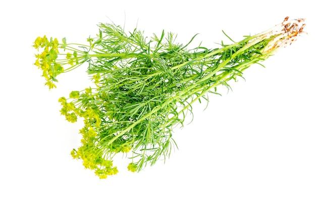 Geneeskrachtige planten, kruiden geïsoleerd op wit. Premium Foto