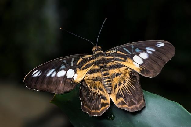 Geopende vleugelsvlinder met onscherpe achtergrond Gratis Foto
