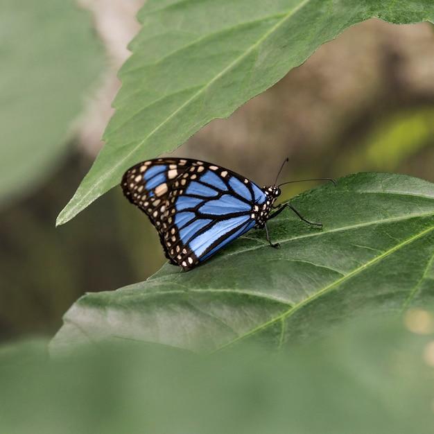 Gerichte blauwe vlinder op blad Gratis Foto