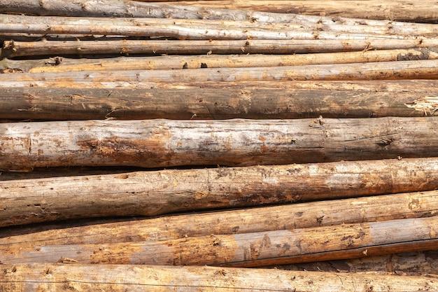 Gestapelde boomstammen gekapt in dennenbossen Premium Foto