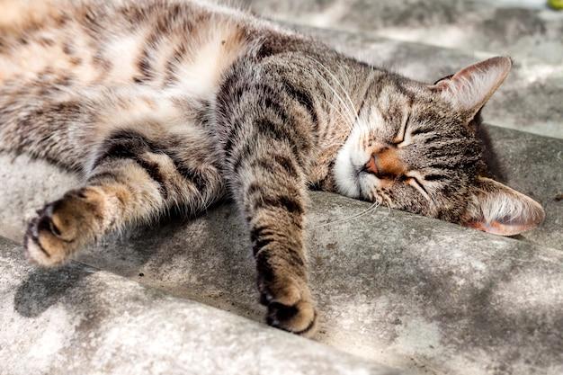 Gestreepte katkat die op een leidak en het rusten liggen Premium Foto
