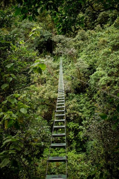 Gevaarlijke brug in een wild bos boven het groen Gratis Foto