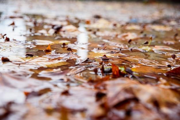 Gevallen bladeren op een natte plas in een park in de winter. Premium Foto