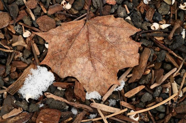 Gevallen esdoornblad tijdens de winter in een bos omgeven door stenen en stokken Gratis Foto