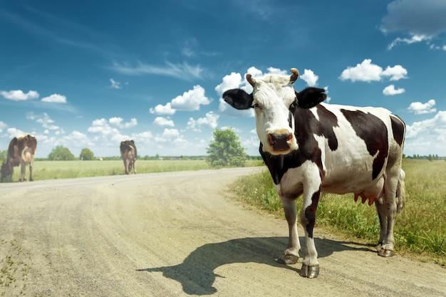 Gevlekte koe grazen op een prachtige groene weide tegen een blauwe hemel. Premium Foto