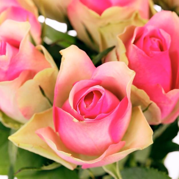 Gewas van boeket van roze rozen geïsoleerd op wit Gratis Foto
