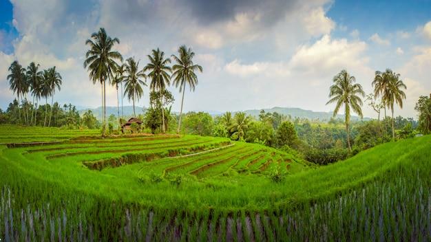 Geweldige panorama rijstvelden azië Premium Foto