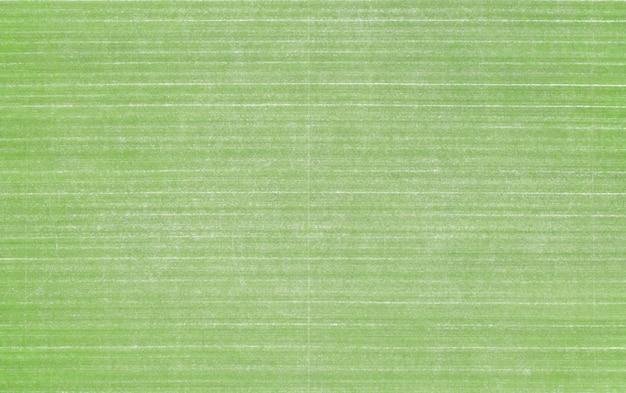 Geweldige textuur van gazon gras op de golfbaan, achtertuin of voetbalstadion. Premium Foto