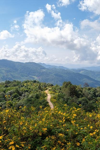 Gezichtspunt van de mexicaanse zonnebloem (goudsbloem). Premium Foto