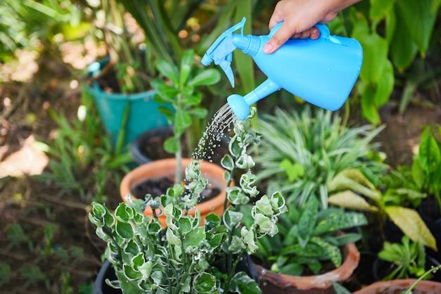 Gieter met kleurrijke blauwe gieter op pot in de tuin. Premium Foto