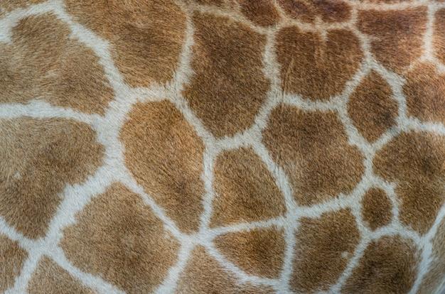 Giraffe bont patroon Premium Foto