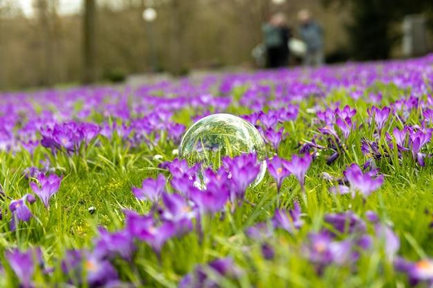 Glazen bol in het midden van paarse bloemen veld Gratis Foto