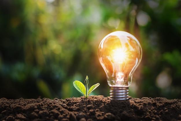 Gloeilamp met kleine plant op de bodem en zonneschijn. concept dat energie in de natuur spaart Premium Foto