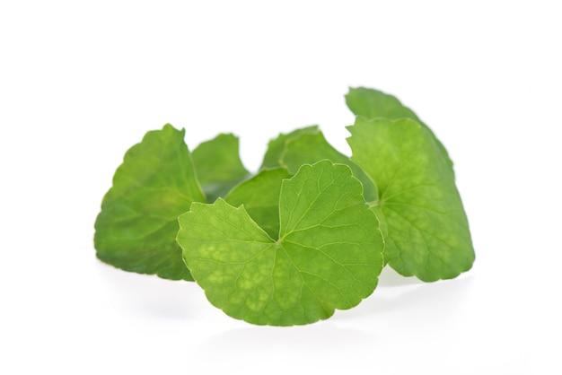 Gotu kola groene bladeren op een wit oppervlak. Premium Foto