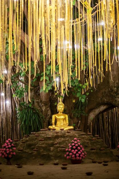 Gouden boeddha onder bodhiboom onder lantaarns in phan tao-tempel Premium Foto