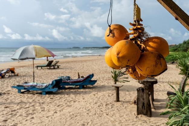 Gouden kokosnoten op het strand Premium Foto