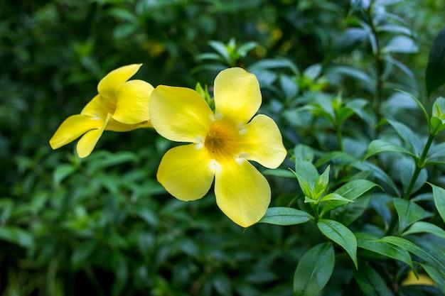 Gouden trompet gele kleur Premium Foto