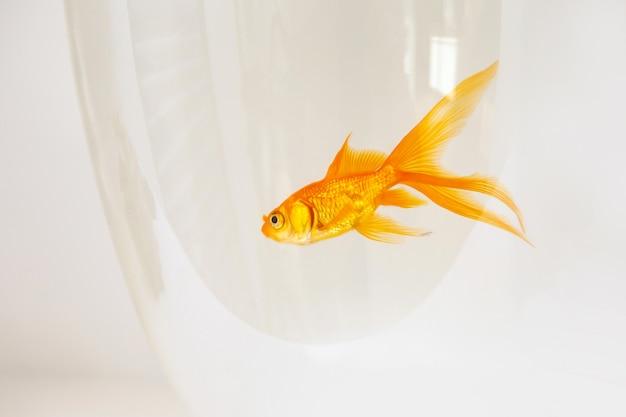 Goudvis die in een vissenkom zwemt Premium Foto