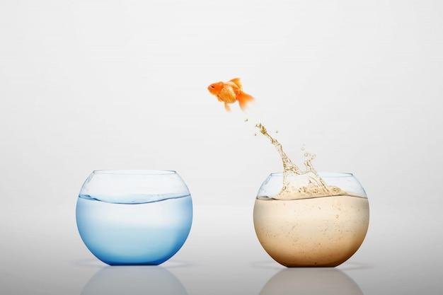 Goudvis die uit in een zoetwaterkom springt Premium Foto