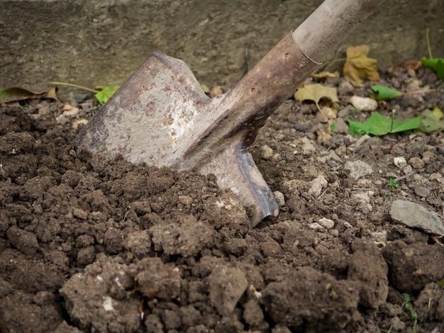Graaf harde grond met een schop tuinwerk in de herfst Premium Foto