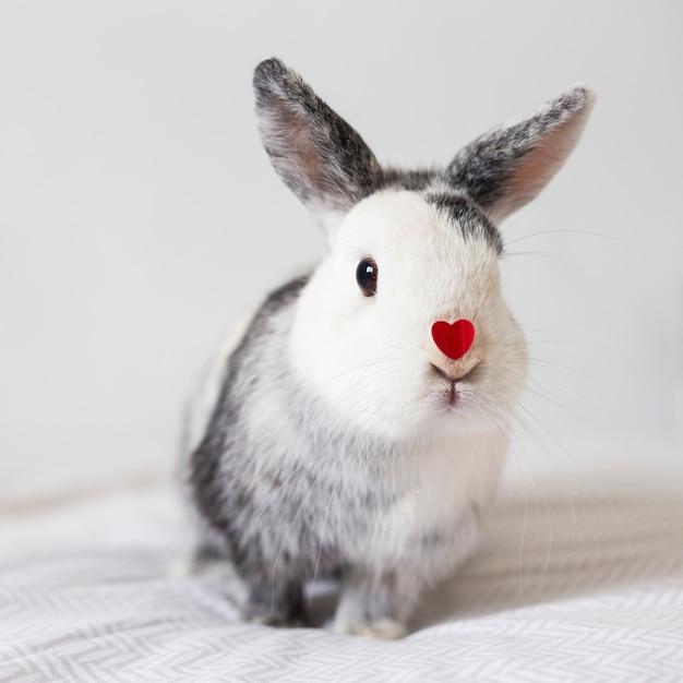 Grappig konijn met ornament rood hart op neus Gratis Foto