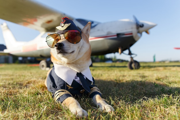 Grappige foto van de shiba inu-hond Premium Foto