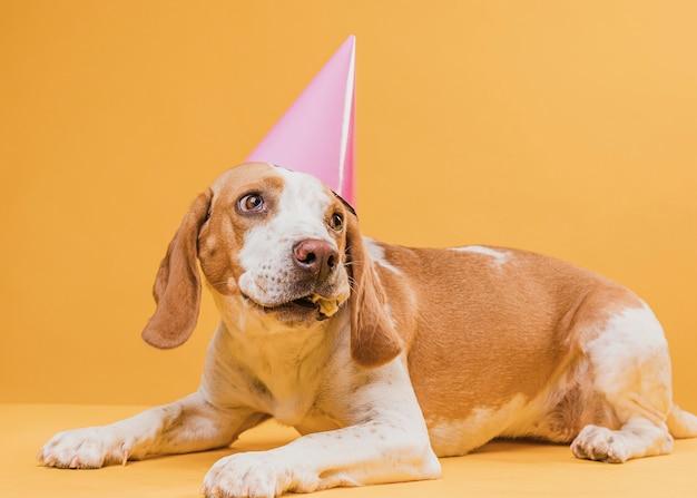Grappige hond die met partijhoed weg kijkt Gratis Foto