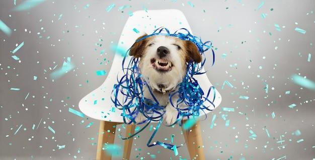 Grappige hond lacht en toont tanden met blauwe serpentines, viert verjaardag, carnaval of nieuwjaar zittend op een scandinavische stoel. Premium Foto