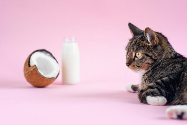 Grappige kat die dichtbij kokosmelk in de fles en verse kokosnoot op roze achtergrond ligt. Premium Foto