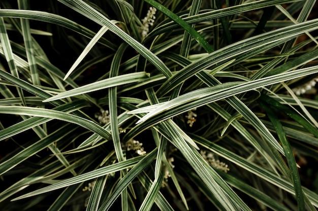 Gras en bladerenachtergrond Gratis Foto