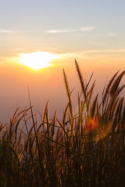 Grasbloem in de herfst met zonlicht Premium Foto