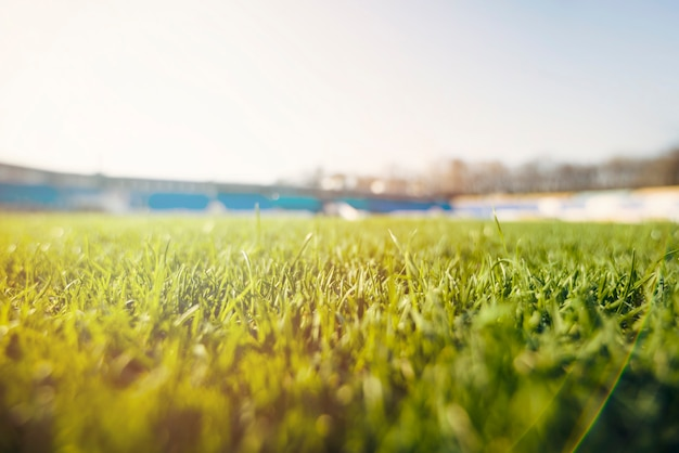 Grashal op stadion Gratis Foto