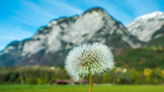 Grass flowers field Premium Foto