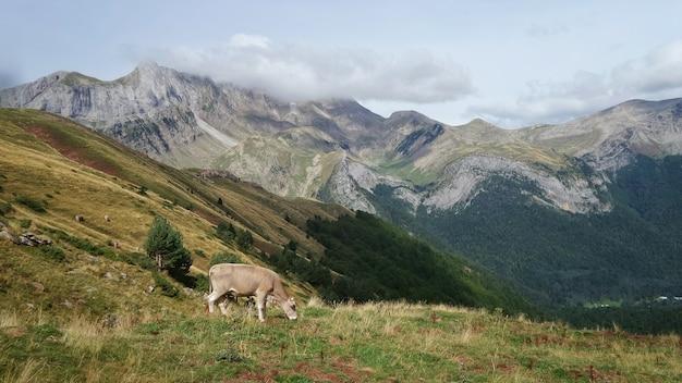 Grazende koe omgeven door bergen bedekt met groen onder een bewolkte hemel overdag Gratis Foto