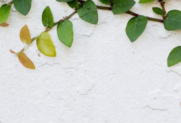 Green creeper plant op witte muur Premium Foto
